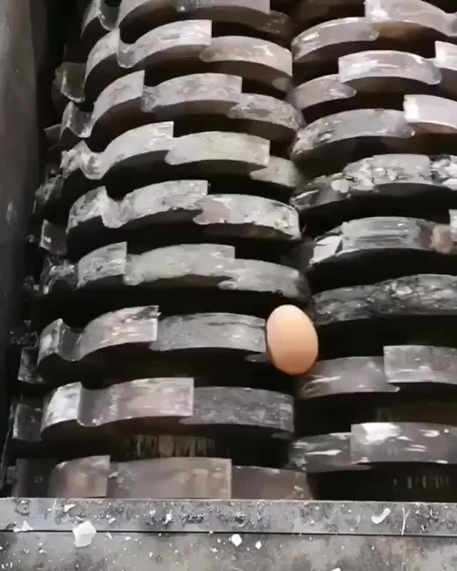 Watch egg vs shredder GIF by GIFs For Everything (@jiffiergifss) on Gfycat. Discover more celebs, funny, instagram GIFs on Gfycat