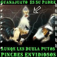 Watch and share El Gallo De Guanajuato GIFs on Gfycat