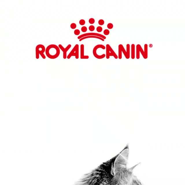 Watch and share Royal Canin GIFs and Cats GIFs by Ice Cream Goya 55009 on Gfycat
