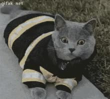 Watch and share Firefighter Cat GIFs on Gfycat