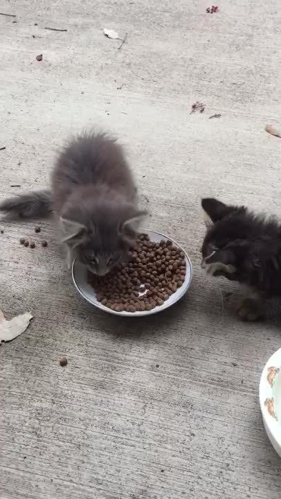 animalsbeingjerks, Kitten Bully (reddit) GIFs
