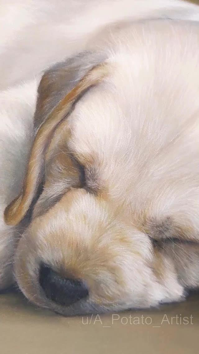 Watch and share Retriever GIFs and Labrador GIFs by Potato Art Studios on Gfycat