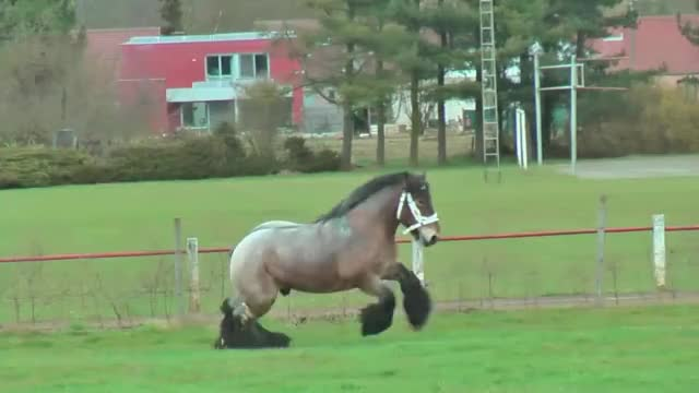 Watch this horse GIF on Gfycat. Discover more Horses, Pony, animals, equestrian, horse, horse racing, horses, jumping, national, pony, riding, vbbt GIFs on Gfycat