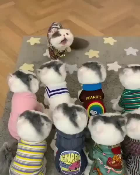 Watch and share Kittens GIFs and Meow GIFs by Fathur on Gfycat