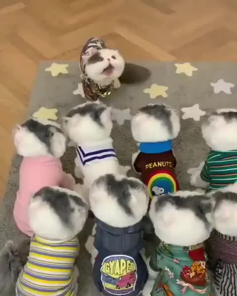 arenakucing, kucing, kucinganggora, kucingcantik, kucingindogram, kucingindonesia, kucingkampung, kucingkesayangan, kucingku, kucinglovers, kucinglucu, kucinglucubanget, kucingmalas, kucingmanja, kucingmeow__, kucingpintar, meong, pecintakucing, videokucing, videokucinglucu, INVANSI KOCHENG GIFs
