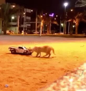 Watch and share Cat Vs. RC Car (x-post /r/catpranks) (reddit) GIFs on Gfycat