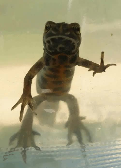 Watch and share Vertebrata GIFs and Amphibia GIFs on Gfycat