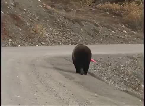Watch and share Alaska GIFs and Animal GIFs by meskaliton on Gfycat