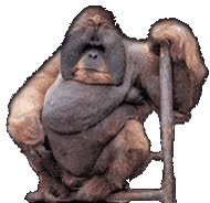 """Watch and share """"animated-gorilla-image-0001"""" animated stickers on Gfycat"""