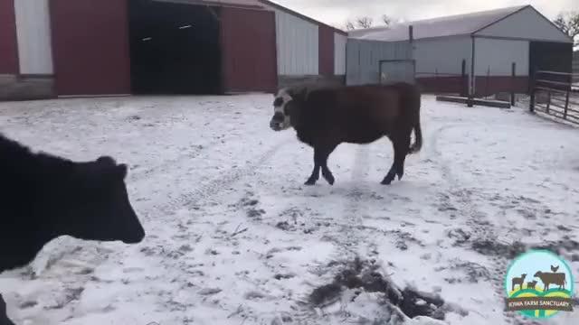Watch and share Iowa Farm Sanctuary GIFs by lnfinity on Gfycat