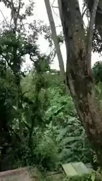 Watch and share Sloth Falls Out Of A Tree GIFs on Gfycat