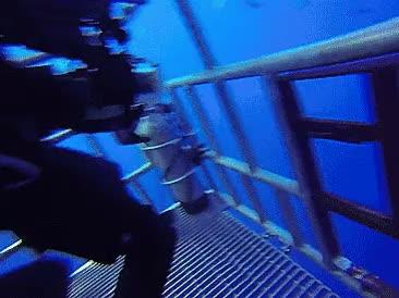 Shark-chan worships diver-senpai's foot .///. ~ : TsundereSharks GIFs