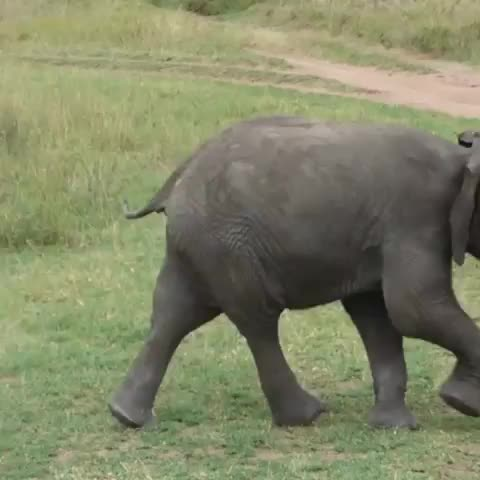 Watch and share Soul Of Tanzania GIFs and Babyanimals GIFs by PM_ME_STEAM_K3YS on Gfycat