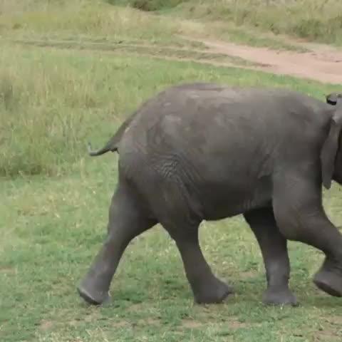africa, babyanimals, babyelephants, big5, cuteanimals, elephant, luxury, safari, soul of tanzania, souloftanzania, tanzania, Playful brothers 🐘❤️ Tag yours below 👇 Credit to Simone Jamieson GIFs