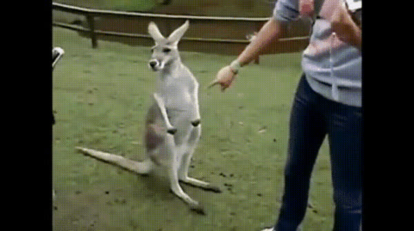 AnimalTextGifs, animaltextgifs,  GIFs