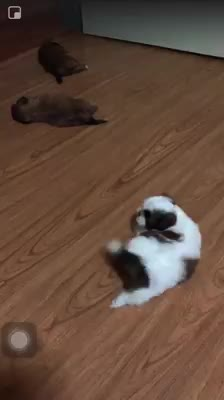 Watch and share Pupper Just Cant Sleep Pupperly GIFs by dwanevalle on Gfycat
