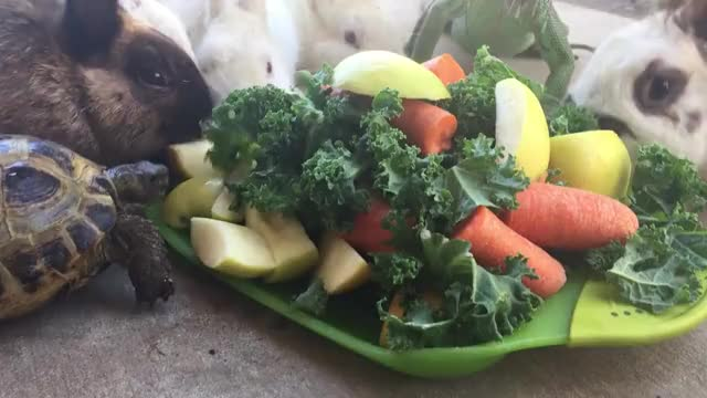 Watch and share Animals Dinner GIFs by razerock on Gfycat