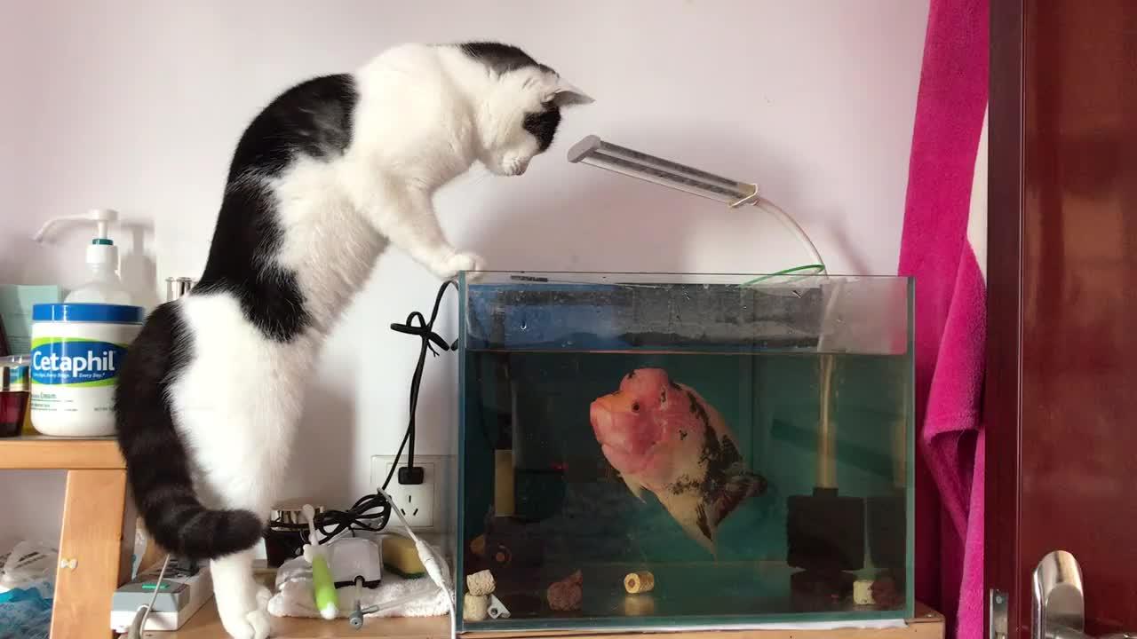 An irritable fish  GIFs