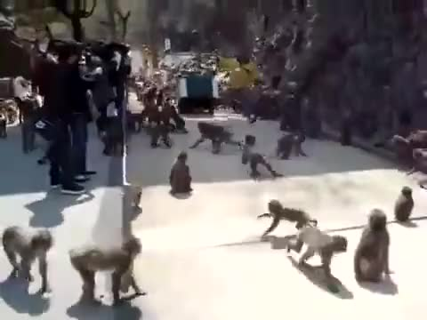 Watch and share Animals GIFs and Monkeys GIFs by Two_Inches_Of_Fun on Gfycat