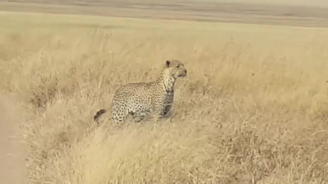 Watch and share Game Reserve GIFs and Kruger Park GIFs on Gfycat