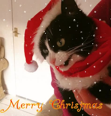 Watch and share Merry Christmas GIFs and Merry Xmas GIFs on Gfycat