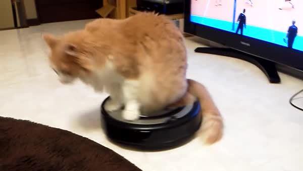 catsridingroombas, catsvstechnology, Around and around... (reddit) GIFs