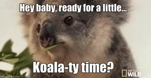 Watch and share Koala Bear GIFs on Gfycat