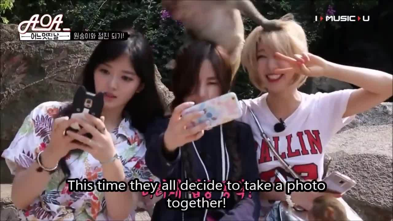 animalsbeingjerks, Chanmi, Mina and Choa GIFs
