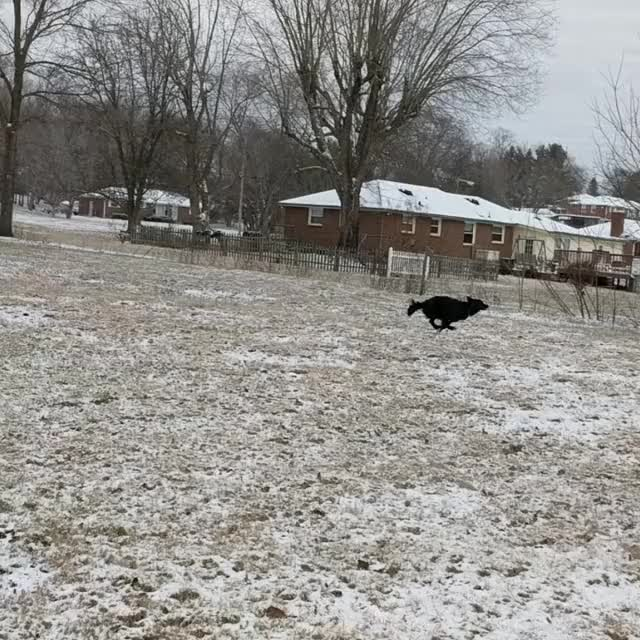 Watch and share Zoomies GIFs on Gfycat