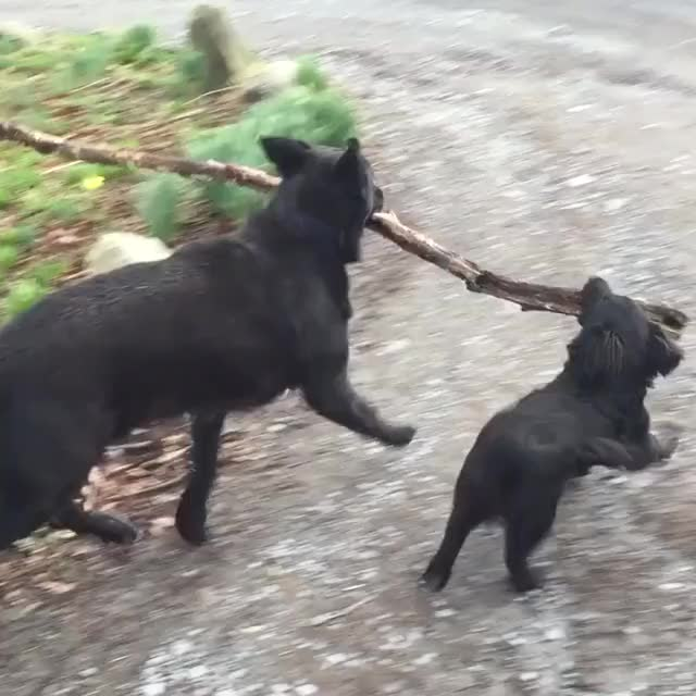 Watch A busy day for branch management GIF on Gfycat. Discover more animalgifs, aww GIFs on Gfycat