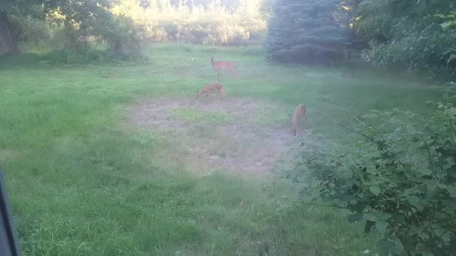 Watch and share Deer GIFs and Fawn GIFs on Gfycat