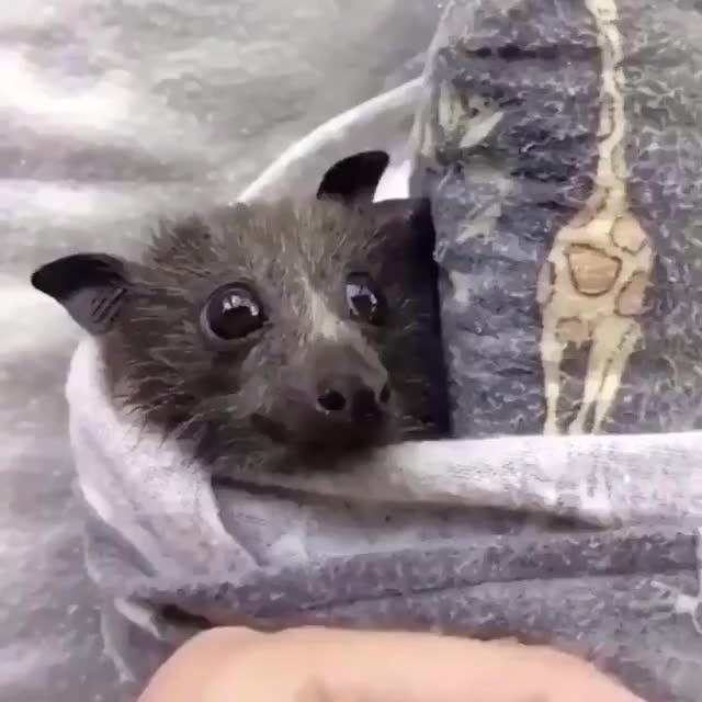 Watch and share Bats GIFs and Cute GIFs by mememaster59 on Gfycat