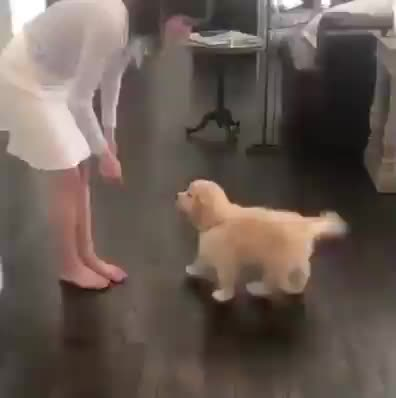 Pupper shakes with both paws instead of one GIFs