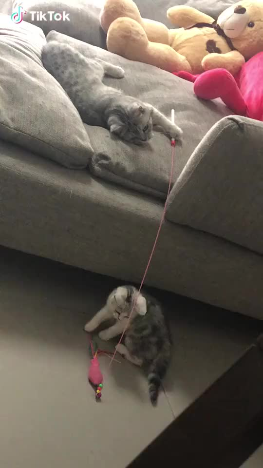 Watch Cat knows cat best GIF by acrobaticdepartment on Gfycat. Discover more related GIFs on Gfycat