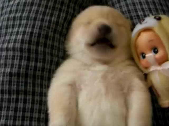Watch and share Puppy GIFs and Cute GIFs by SKEZ520 on Gfycat