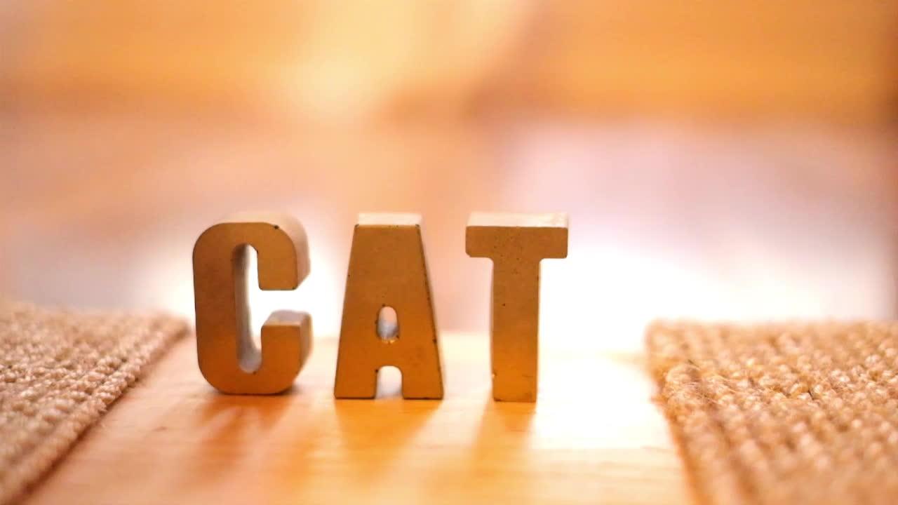 cat, loop, Cat inspecting cat GIFs