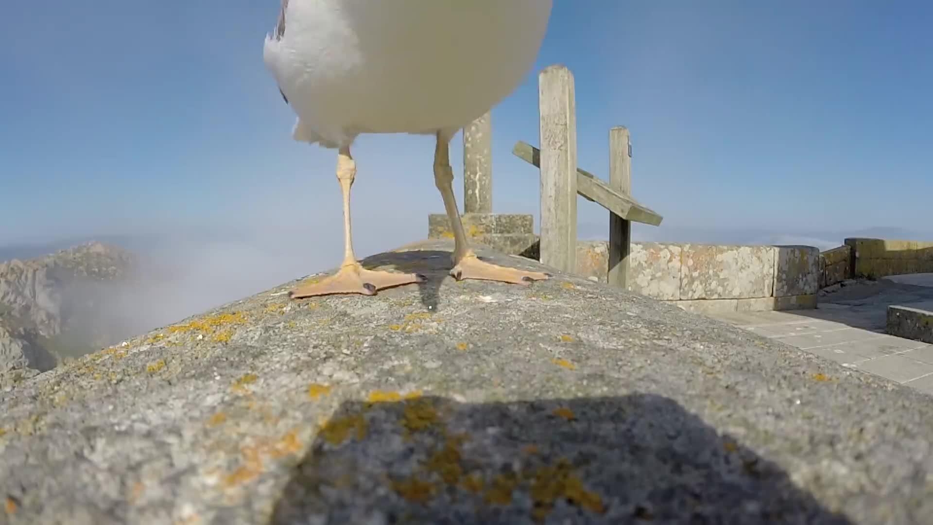 GoPro, HD Camera, Hero Camera, Hero2, Hero3, Hero3Plus, Hero4, rad, stoked, video, GoPro: Seagull Stole My GoPro GIFs
