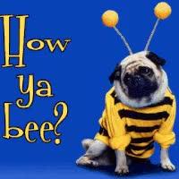 Watch and share How Ya Bee? GIFs on Gfycat