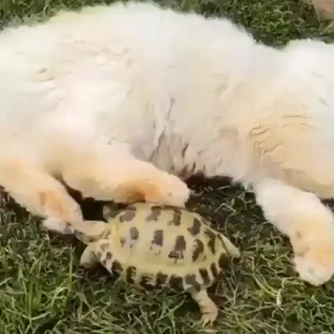 Watch Turtle attempting to feast on some beans GIF by tothetenthpower (@tothetenthpower) on Gfycat. Discover more cats GIFs on Gfycat