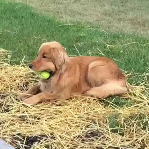 Watch and share Dog GIFs by agiel12 on Gfycat