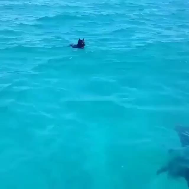 Watch and share Dolphin Makes A New Friend GIFs by likkaon on Gfycat