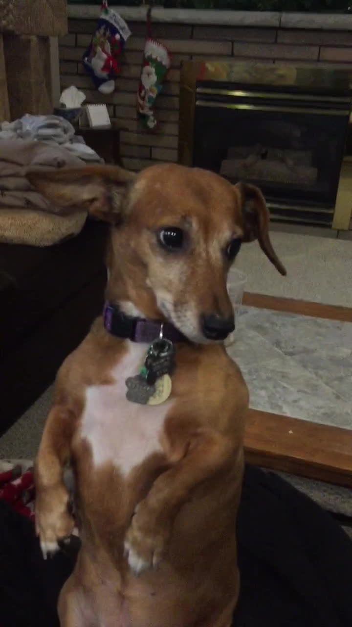 eyebleach, My dog just does this all the time. GIFs