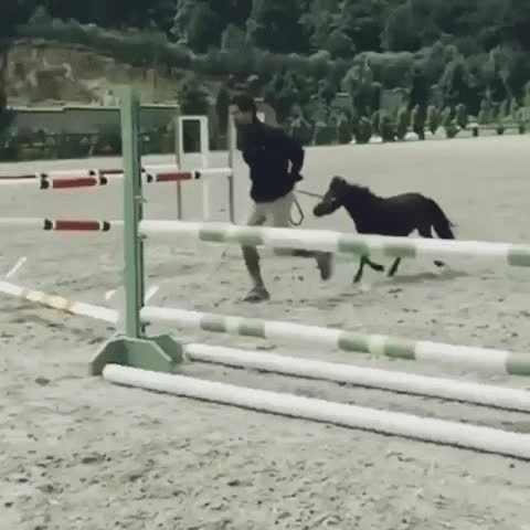 Watch and share This Miniature Horse Probably Jumps Better Than Your Warmblood GIFs on Gfycat