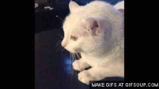 Watch and share Gato GIFs on Gfycat