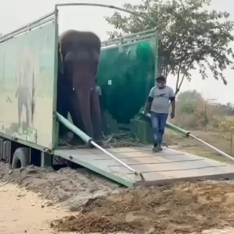 Watch and share Wildlife Sos GIFs and Wildlifesos GIFs by b12ftw on Gfycat