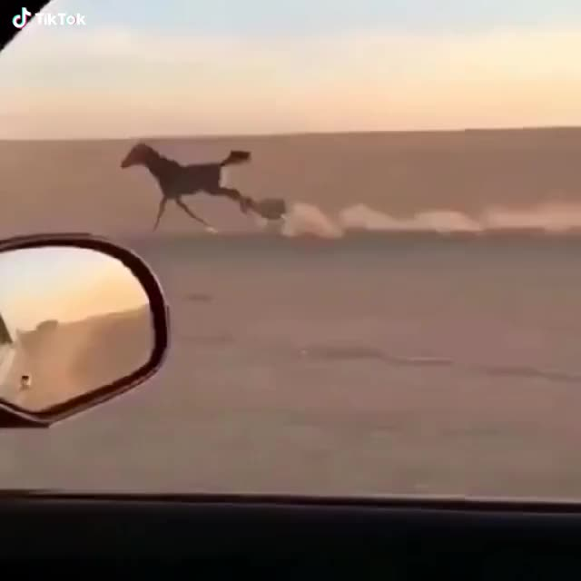 Watch and share Running In The Desert  GIFs by Funny gifs on Gfycat