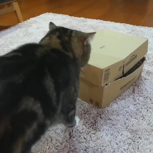 Maru puts the squeeze on GIFs