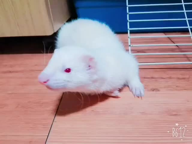Watch and share Ferret GIFs on Gfycat
