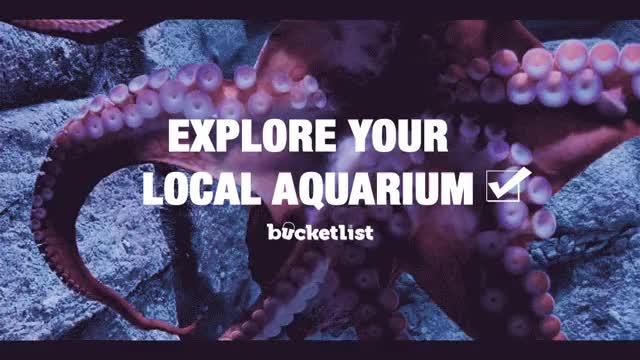 Watch and share Aquarium GIFs on Gfycat