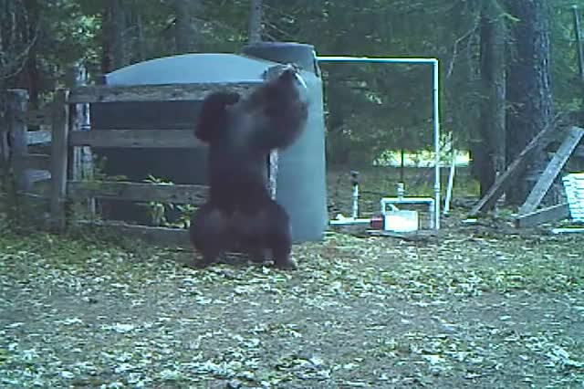 Watch and share Right In The Bear Necessities  GIFs by Beef on Gfycat